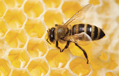 bee honeycomb