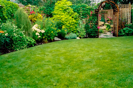 perfect lawns tips