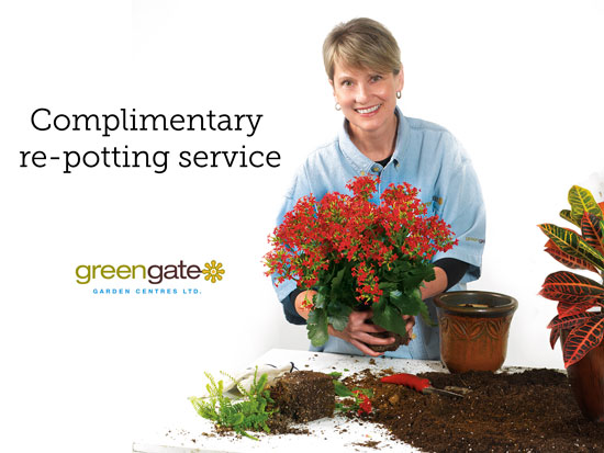 free plant repotting at greengate