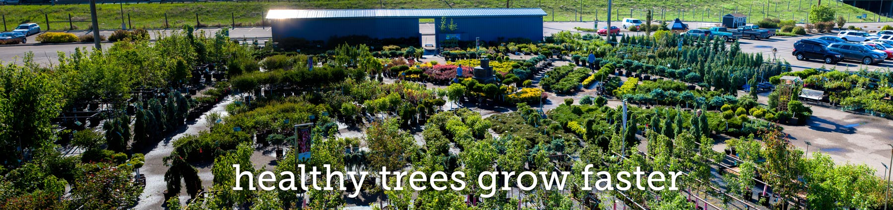 greengate's tree and shrub selection
